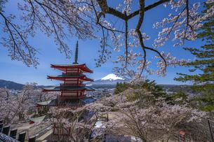 新倉山浅間公園の忠霊塔と桜と富士山の写真素材 [FYI04529237]
