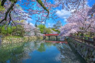 姫路城と桜の写真素材 [FYI04529264]