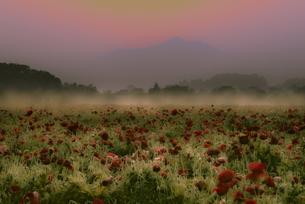 小貝川ふれあい公園のポピーと筑波山の写真素材 [FYI04529378]