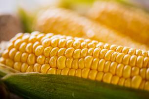 Closeup image of fresh yellow corn.の写真素材 [FYI04529563]