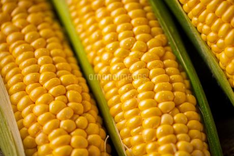Closeup image of fresh yellow corn.の写真素材 [FYI04529564]