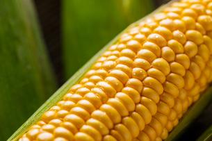 Closeup image of fresh yellow corn.の写真素材 [FYI04529565]