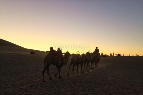 中国 甘粛省 敦煌 シルクロード 莫高窟 砂漠 ラクダの写真素材 [FYI04529708]