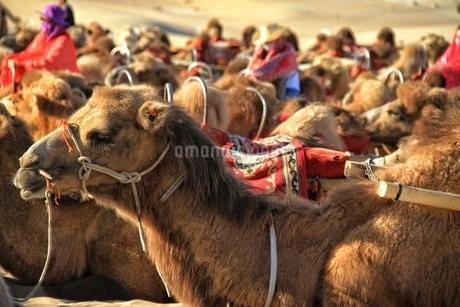 中国 甘粛省 敦煌 シルクロード 莫高窟 砂漠の写真素材 [FYI04529712]