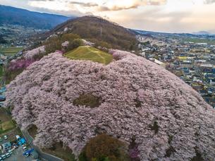 弘法山古墳の桜の写真素材 [FYI04530007]