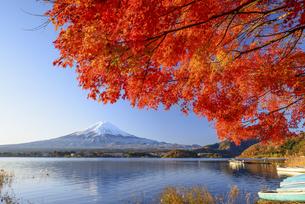 山梨県 河口湖の紅葉と富士山の写真素材 [FYI04530049]