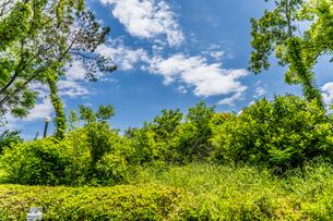 空と雲と緑の木々 鶴見緑地公園の写真素材 [FYI04530090]