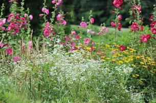 雑草も美しい雪国の夏の写真素材 [FYI04530565]