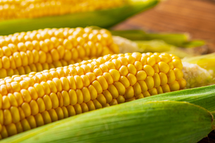 Corn cobs on wood background.の写真素材 [FYI04530589]