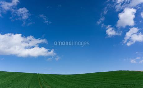 丘と空と雲の写真素材 [FYI04530672]