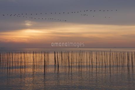 朝の海をV字編隊で飛ぶ鳥の写真素材 [FYI04530812]