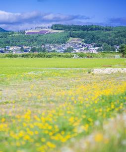 北海道 自然 田園風景 富良野の写真素材 [FYI04531029]