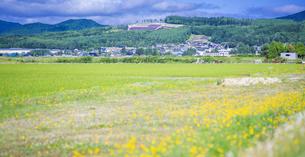 北海道 自然 田園風景 富良野の写真素材 [FYI04531030]