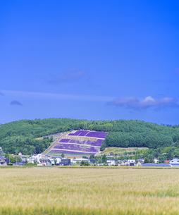 北海道 自然 田園風景 富良野の写真素材 [FYI04531032]