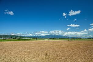 麦畑の写真素材 [FYI04531263]