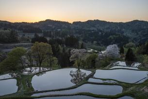 桜と儀明の棚田の写真素材 [FYI04531681]