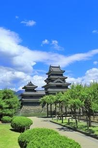 新緑の松本城の写真素材 [FYI04532484]