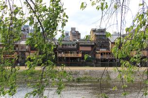 京都 鴨川の床を緑の隙間からの写真素材 [FYI04532502]