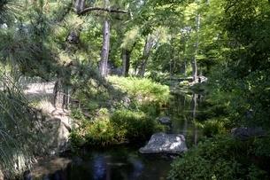 大阪,長居植物園,小川と新緑の写真素材 [FYI04532742]