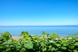 緑のむこうに見える、夏のさわやかな海と空の写真素材 [FYI04532843]