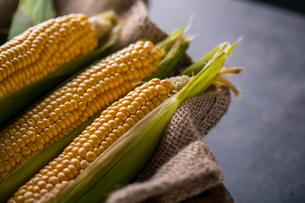 Corn cobs on burlap sack.の写真素材 [FYI04533007]