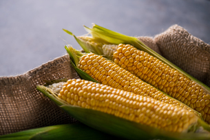 Corn cobs on burlap sack.の写真素材 [FYI04533008]