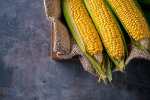 Corn cobs on burlap sack.の写真素材 [FYI04533011]