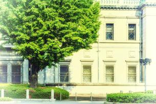 新緑のイチョウとレトロな建物の写真素材 [FYI04533015]