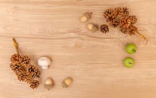 autumn tree nuts backgroundの写真素材 [FYI04533026]