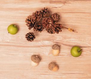 autumn tree nuts Bの写真素材 [FYI04533027]