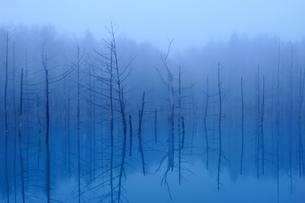 朝靄の青い池の写真素材 [FYI04533034]