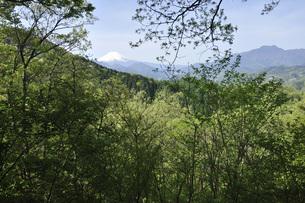 新緑に富士山の写真素材 [FYI04533190]