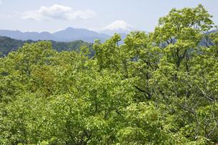 新緑に富士山の写真素材 [FYI04533224]
