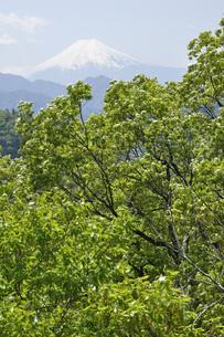 新緑に富士山の写真素材 [FYI04533242]