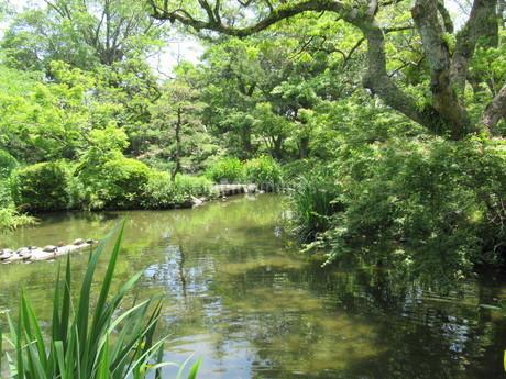 亀のいる庭園の池の写真素材 [FYI04533257]