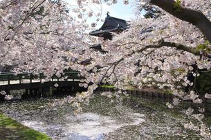 弘前公園の写真素材 [FYI04534088]