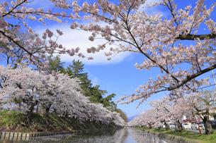 弘前公園の写真素材 [FYI04534091]
