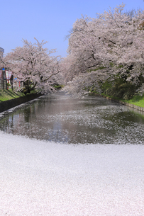 弘前公園の写真素材 [FYI04534098]