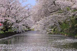 弘前公園の写真素材 [FYI04534100]