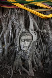 ワット・プラ・マハータート アユタヤの木の根に埋まる仏頭の写真素材 [FYI04534413]