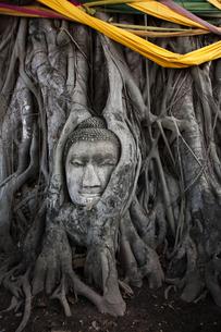 ワット・プラ・マハータート アユタヤの木の根に埋まる仏頭の写真素材 [FYI04534414]