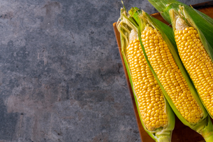 Corn cobs on dark background.の写真素材 [FYI04534437]