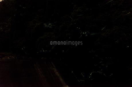 蛍の写真素材 [FYI04534716]