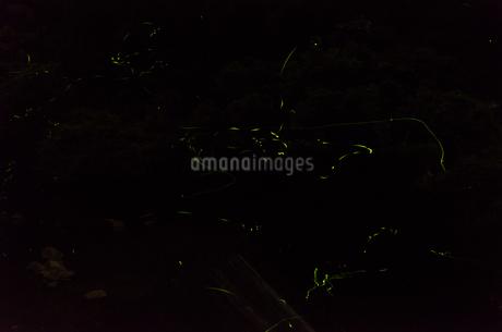 蛍の写真素材 [FYI04534717]