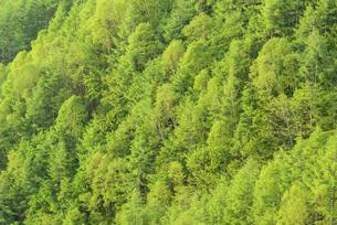 新緑の森の写真素材 [FYI04535018]