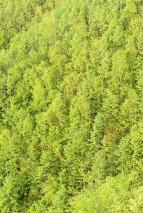 新緑の森の写真素材 [FYI04535032]