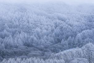蓼科山の霧氷の写真素材 [FYI04535281]