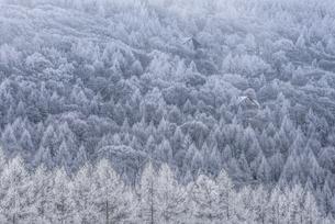 蓼科山の霧氷の写真素材 [FYI04535282]