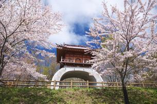 オタモイ唐門と桜の写真素材 [FYI04535633]