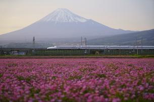 富士山と新幹線とお花畑の写真素材 [FYI04535754]